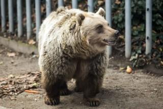 Medve és árnyéka (medve, barnamedve, barnamedve, állatkert, )