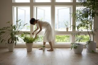ablak, növény (ablak, növény, dekor, fény, lakás)