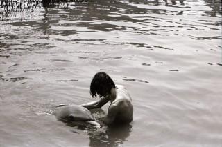 dolphin lover 1 (delfin, dokumentumfilm, )