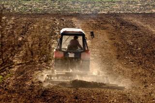 szántóföld (szántóföld, aratás)