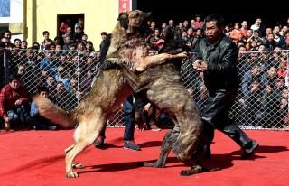 Kínai kutyaviadal (kína, kutyaviadal, )