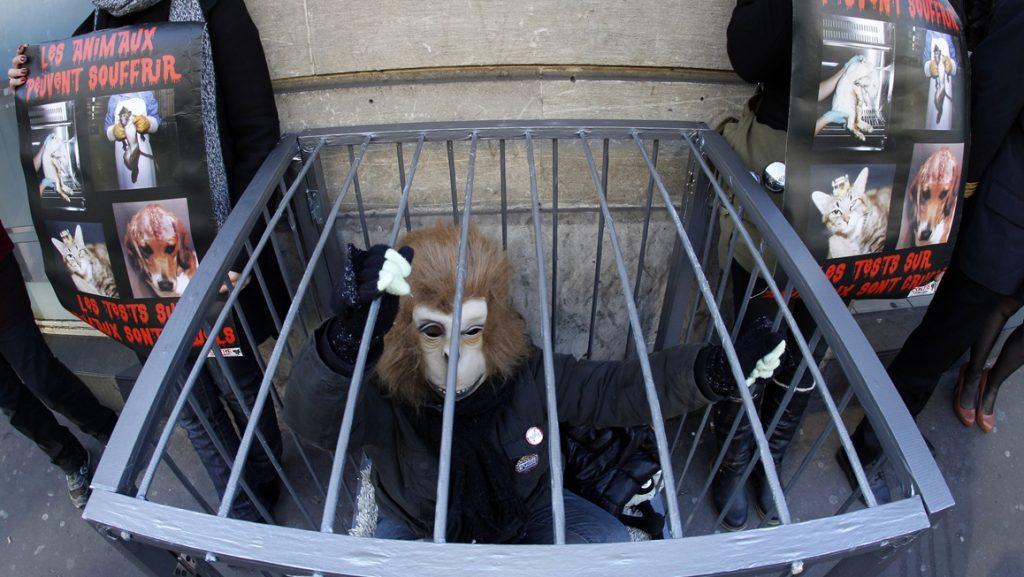 állatkísérletek ellen tiltakozók (állatkísérletek, tiltakozás, )
