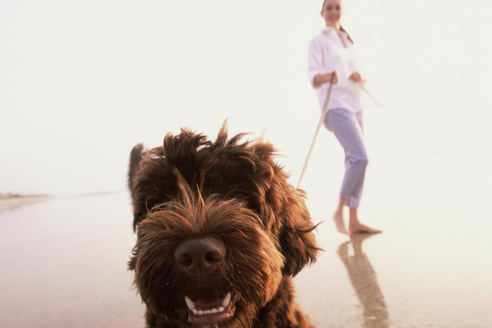kutya sétáltatás, póráz (kutya sétáltatás, póráz)