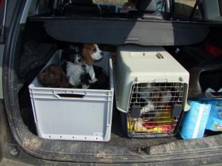 kutyacsempészet (kutyacsempészet)
