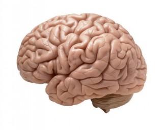 Emberi agy (emberi agy)