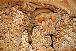 Neandervölgyi (neandervölgyi)