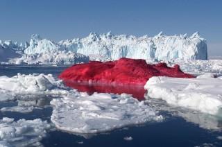 Rózsaszín jéghegy (jéghegy, )