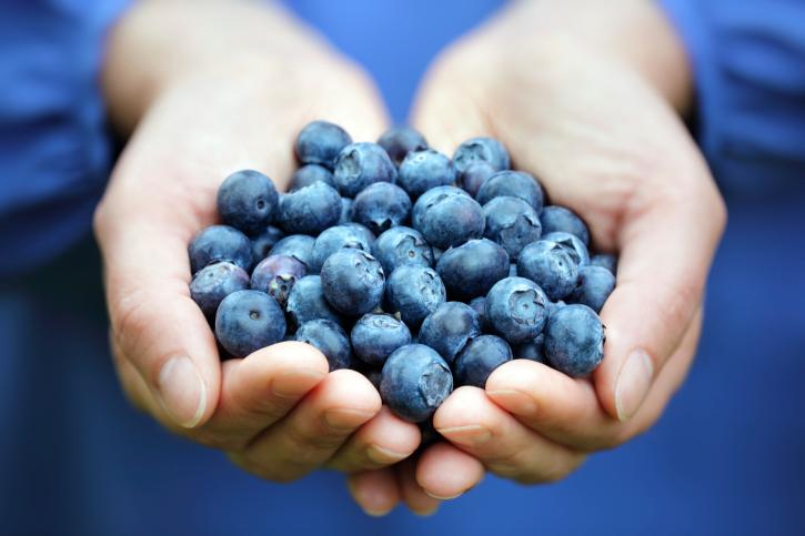 kék áfonya (áfonya, gyümölcs, bogyó,)