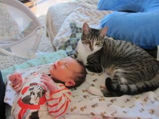 macska és baba (macska, baba, )