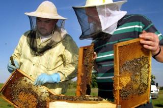 méhész (méhész, méh, méhkaptár)