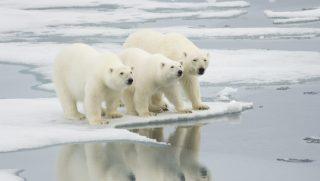 polarbears (környezetszennyezés, felmelegedés, globális felmelegedés, üvegházhatású gázok, üvegházgázok, meteorológia, klímaváltozás, nasa, tudomány)