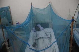 Dengue-lázas beteg (Array)