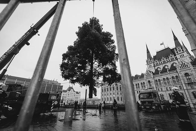 Fenyőfa (Array)