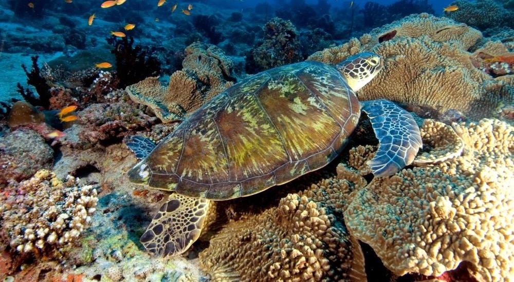Korall (Array)
