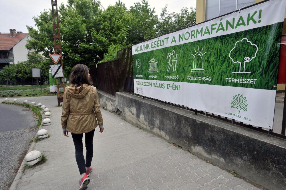 Normafa szavazás (Array)