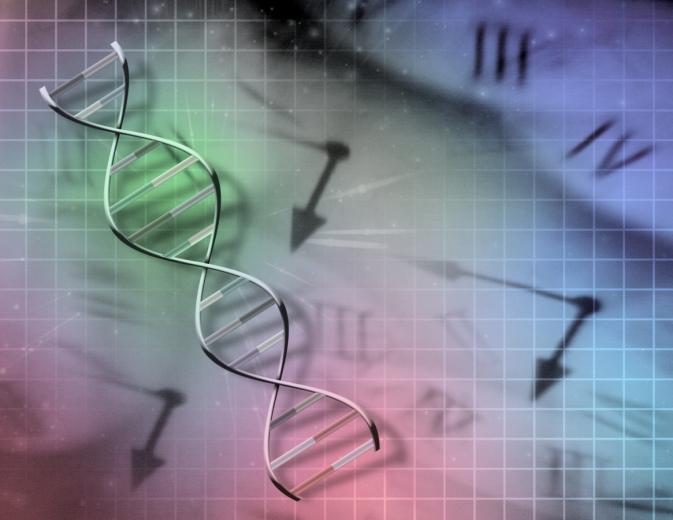 biológiai óra (Array)