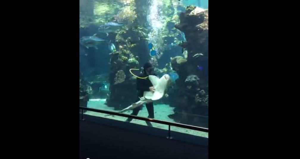cápa vakargatás (Array)