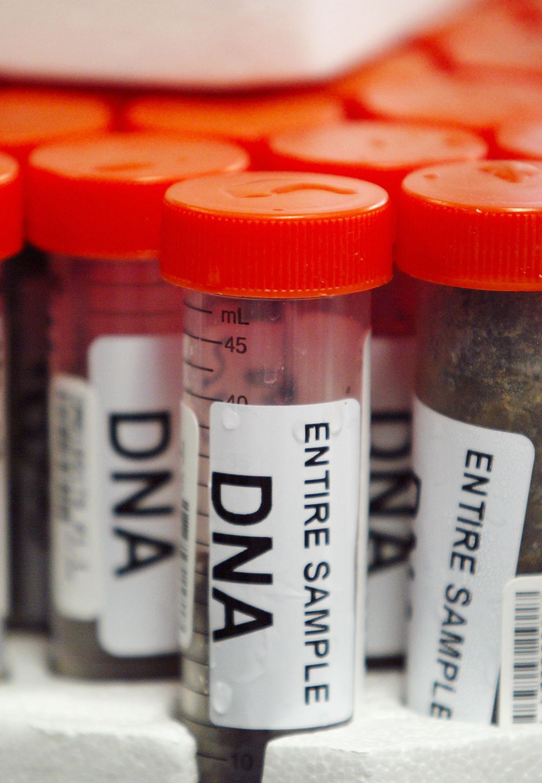 genom-3 (Array)