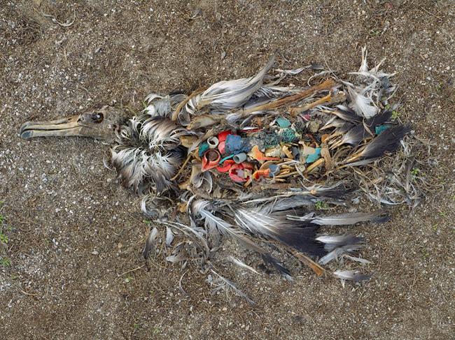 környezetszennyezés 05 (Array)