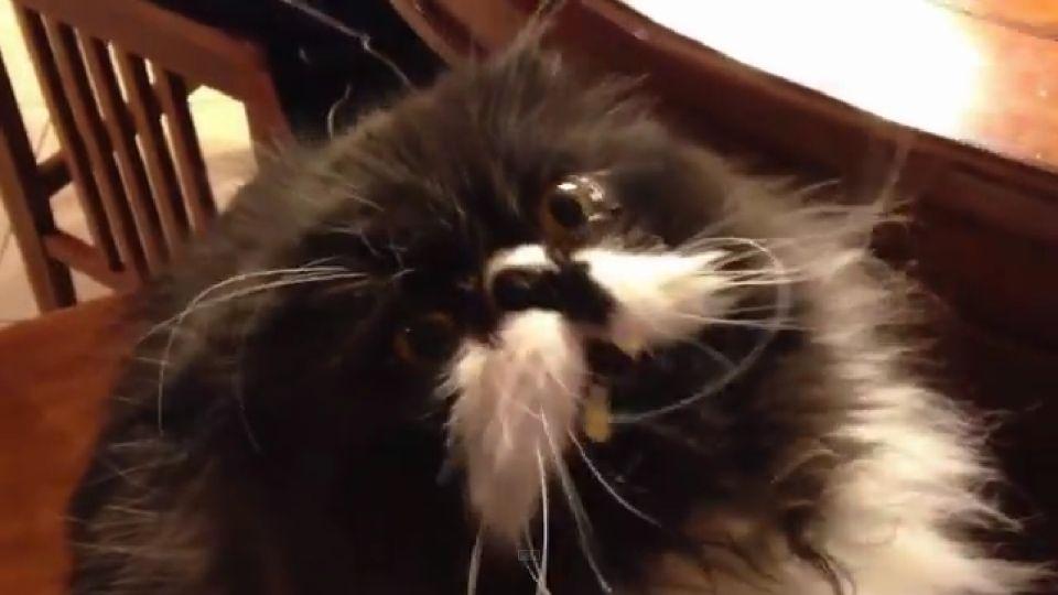 macska és jégkrém (Array)