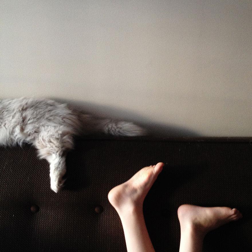 macska (Array)