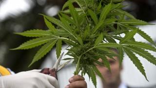 marihuána (Array)