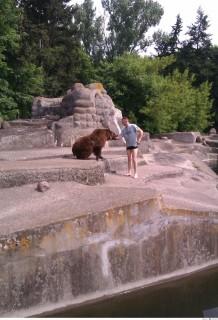 medve (Array)