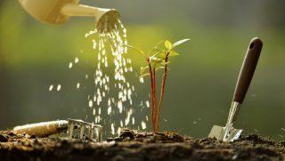 növény (Array)