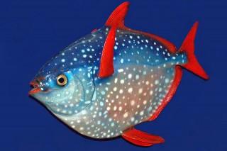 tündöklőhal (Array)