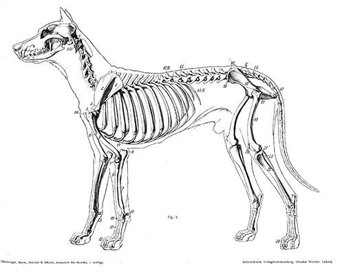 Anatómia (Array)