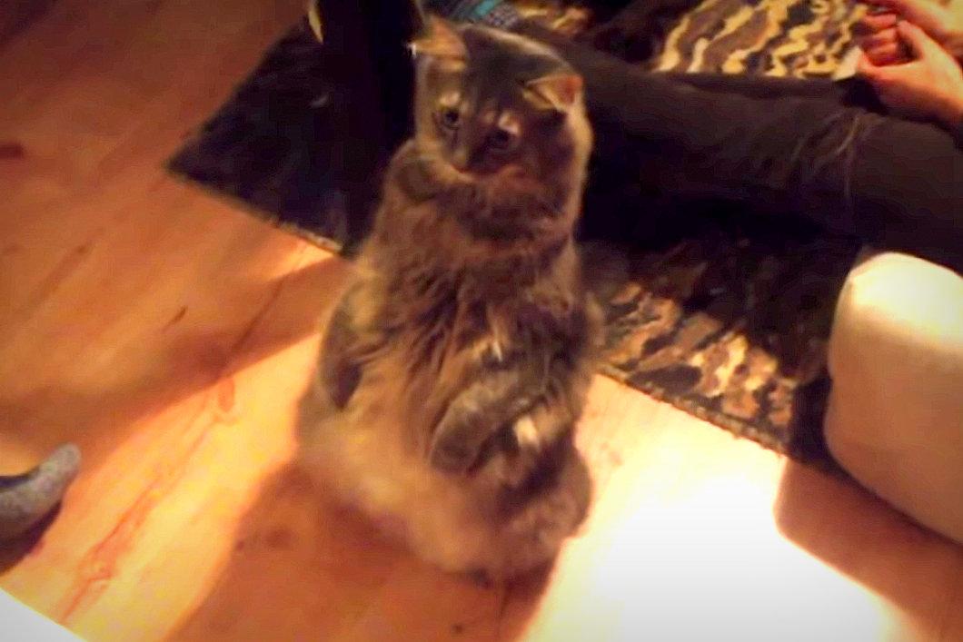 Bámuló macska (Array)