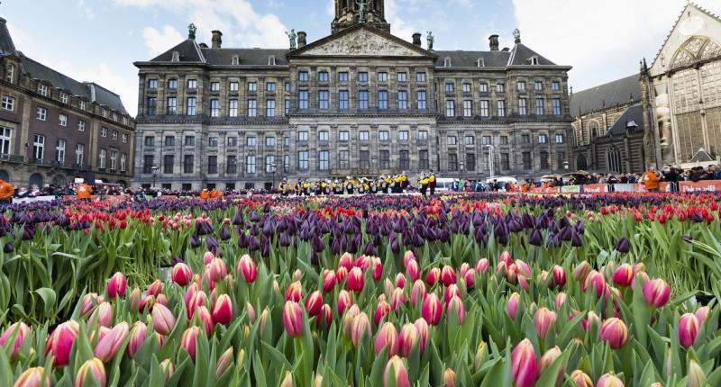 Hollandia (Array)