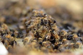 Méhek (Array)