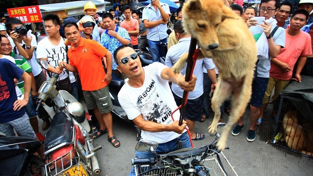 Yulin kutyahús (Array)