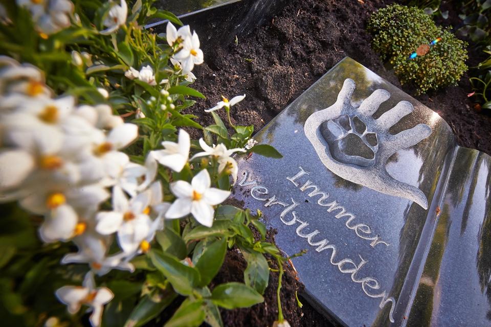 állatbarát temető (Array)