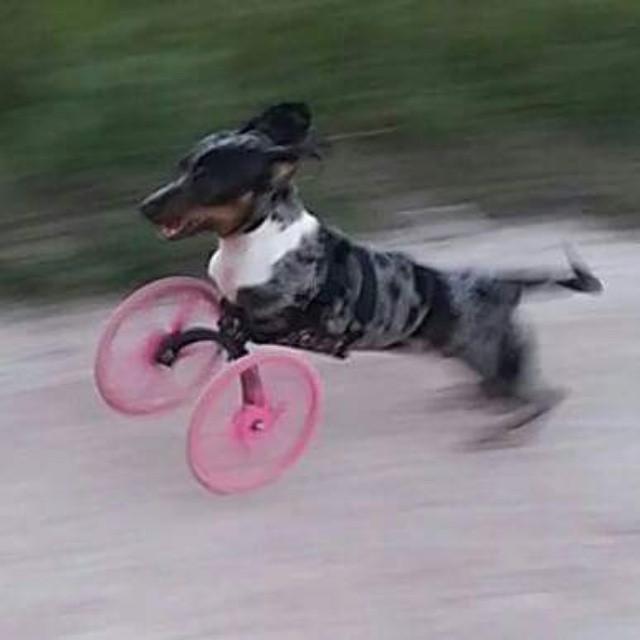 kerekes kutya (Array)