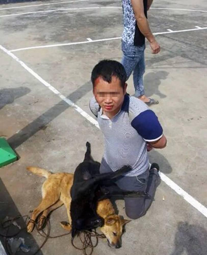 meglincslet kutyagyilkos 2 (Array)