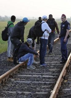 menekült (Array)