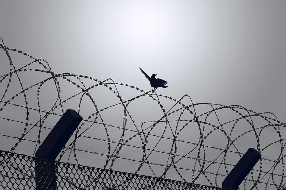 szögesdrót, kerítés, határ (Array)