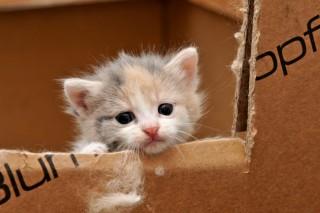 szomorú cica (Array)