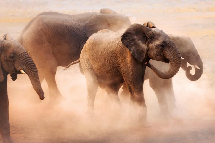 Elefántok (Array)