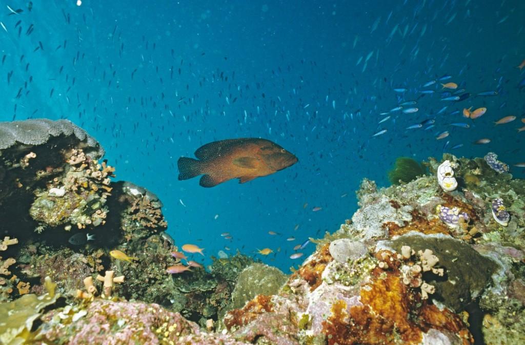 Nagy-korallzatony(1)(430x286).jpg (Array)