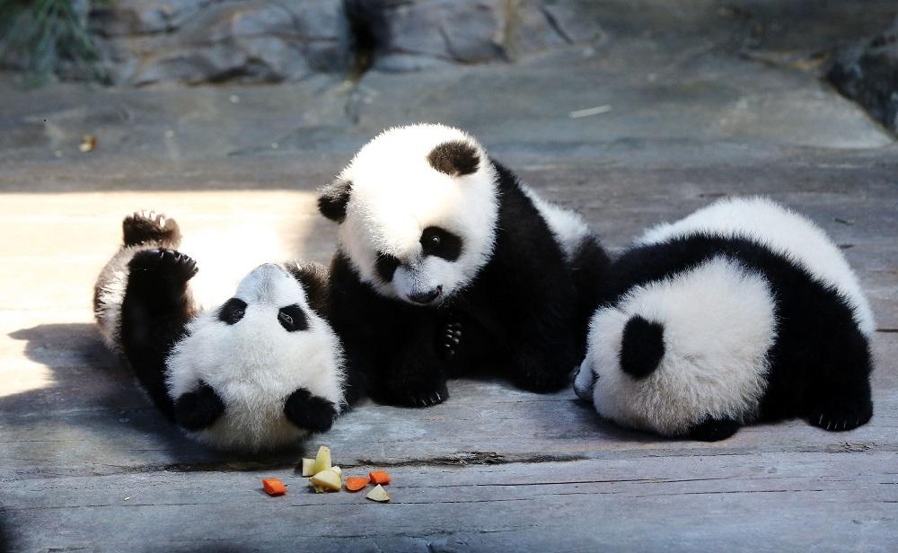 Pandaikrek(960x640).jpg (Array)