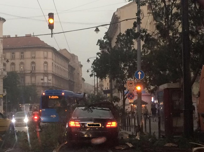budapest fa vihar (Array)