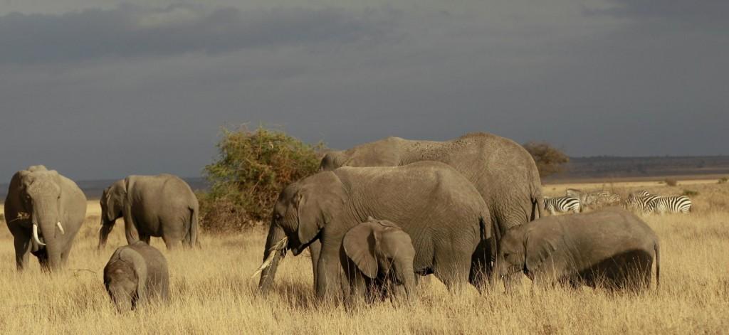 elefánt-1 (Array)
