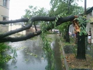 kidőlt fa (Array)