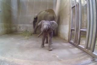 nyiregyhazi-kiselefant(960x640).jpg (Array)