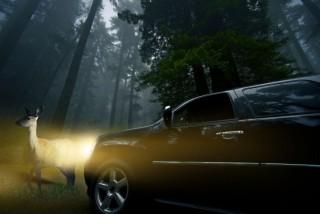 őz és autó (Array)