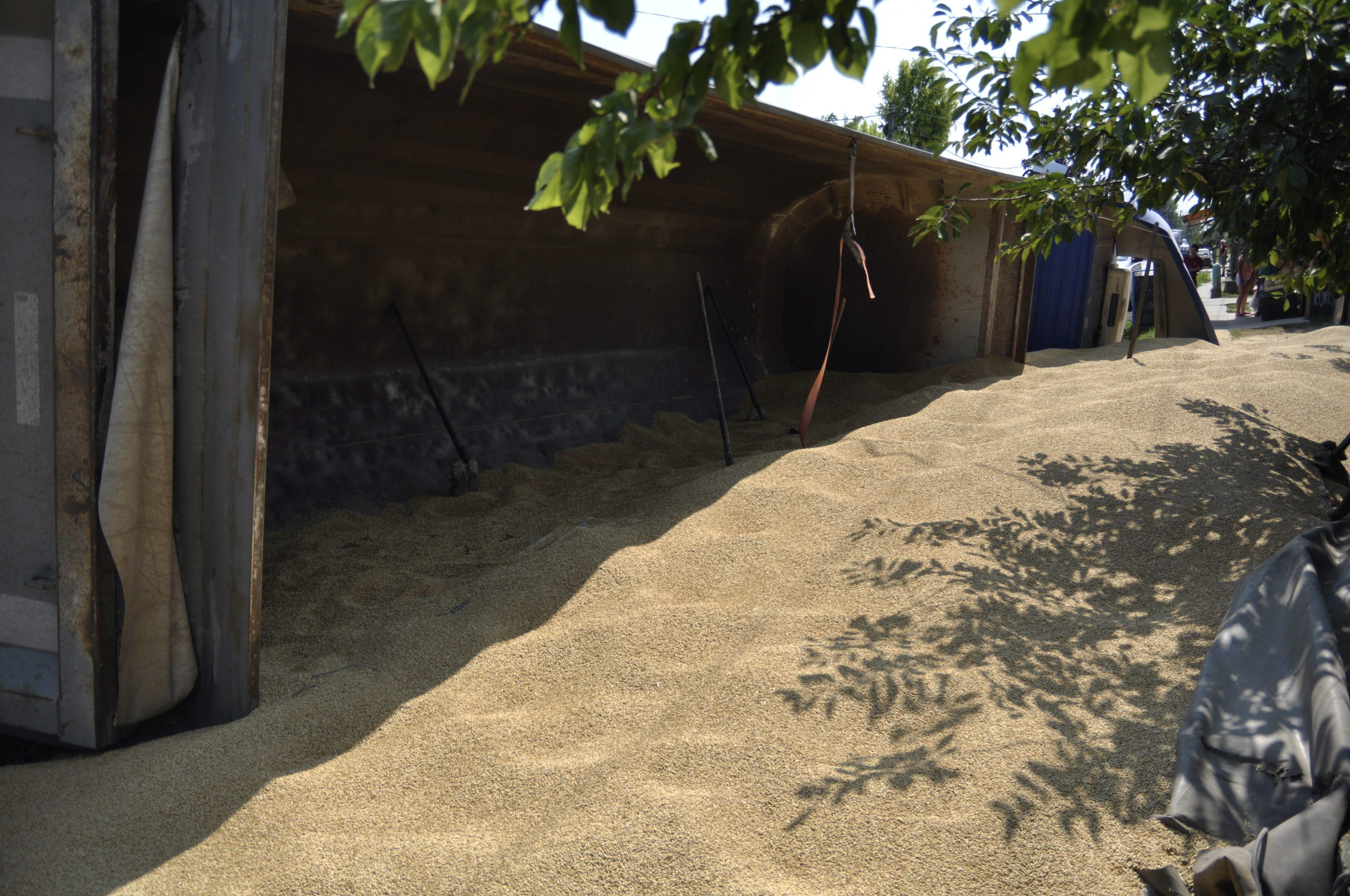 Gyömrői búzaömlés (Array)