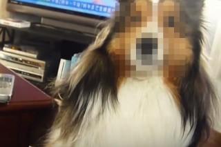 Kipixelezett kutya (Array)